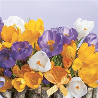 Ubrousky jaro DAISY - jarní květy