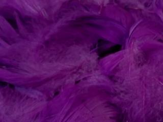 Piórka w pude³ku ANMA fioletowe