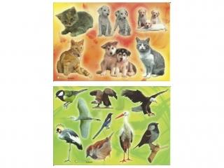 Naklejki POLSYR Ma³e - ptaki/zwierzêta domowe 25ark.